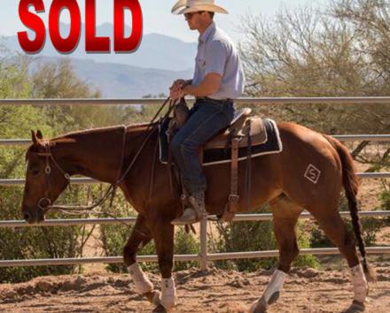 Ride Smart Horsemanship | Horses For Sale